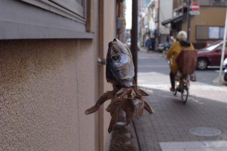 100209iwashi.jpg