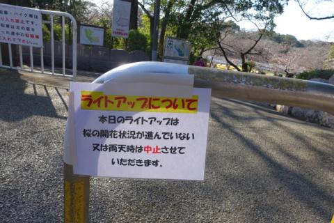 160407sakura02