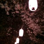 今年の桜の二週間