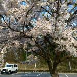 雨・晴れ・桜——春の庄内散歩旅その1
