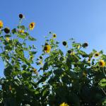 夏畑の日常